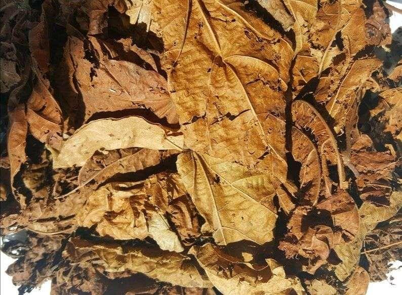 feuilles djeka pour retrécir le vagin